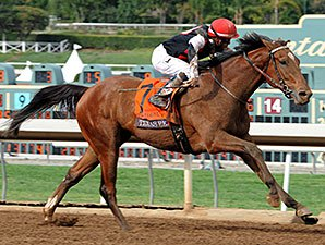Jockey World Featured Horses